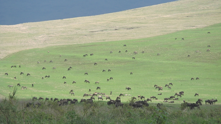 The Ngorngoro Crater