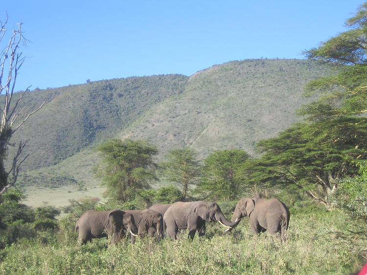 Elephants in the Crater